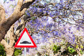 Triangular road sign warning of speed bump against purple jacara — Stock Photo