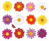 Colorful flowers — Stock Vector