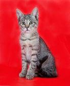 Gatito atigrado con ojos verdes sentado en rojo — Foto de Stock