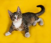 Striped kitten lying on yellow  — Photo