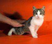 Striped kitten sitting on orange  — Stock Photo