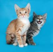 Red and striped kitten sitting on blue and meow — Stock Photo