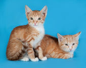 Two red and white kittens sitting on blue — Stock Photo