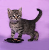 Striped small kitten near bowls with food stands on lilac  — Stockfoto