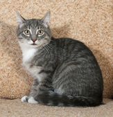 Tabby with white cat sitting on sofa — Stockfoto