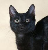 Black kitten standing on yellow  — Stock Photo