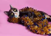 Tricolor cat wrapped Christmas tinsel, lying on pink  — Stock Photo