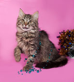 Striped fluffy kitten with Christmas beads sits on pink  — Stock fotografie