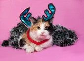 Tricolor cat Christmas decorations lying on pink  — Stock Photo