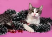 White and gray cat in Christmas decorations lying on pink  — Stock Photo