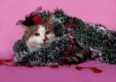 White and tabby cat in Christmas decorations lying on pink  — Stock Photo