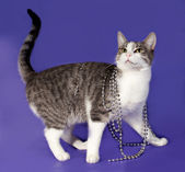 Striped and white cat wrapped with silver beads Christmas standi — Stock Photo
