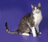 Striped and white cat wrapped with silver beads Christmas sittin — Stock Photo
