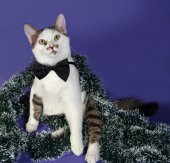White and tabby cat in bow tie and Christmas tinsel sitting on b — Stockfoto