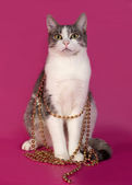 White and tabby cat sitting in Christmas tinsel on pink  — Stock fotografie
