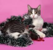 White and gray cat in Christmas decorations lying on pink  — Foto Stock