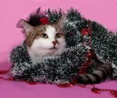 White and tabby cat in Christmas decorations lying on pink  — 图库照片