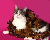 White and tabby cat lying in Christmas tinsel on pink  — Stock Photo