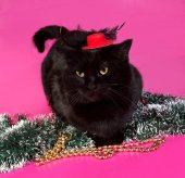 Black cat wrapped Christmas tinsel sitting on pink — Stock Photo