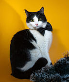 White and black cat in bow tie sitting on yellow  — 图库照片