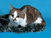 White and gray cat in Christmas decorations lying on blue  — Stock Photo
