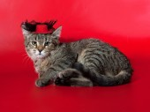 Striped kitten lying on red  in red hat — Stock Photo
