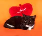 Fluffy black kitten lying on orange  — Stock Photo