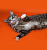 White and striped spotted cat lying on orange  — Stock Photo