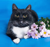 Black and white cat lying on blue with flowers — Stock Photo