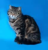 青の上に座ってストライプ子猫 — ストック写真
