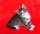 Kleine pluizig tabby kitten zittend op rood — Stockfoto