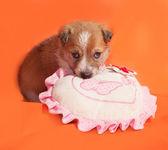 Little yellow puppy lying on orange  — Foto de Stock