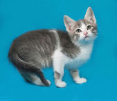 Small white and tabby kitten standing on blue — Stock Photo
