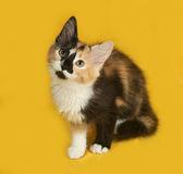 Sarı üzerinde oturan üç renkli yavru kedi — Stok fotoğraf