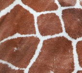 Giraffe coat pattern — Stock Photo