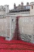 Poppies at The Tower of London London UK — Stock Photo