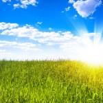 Sunset sun and field of green fresh grass — Stock Photo #65927737