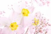 Spring floral border, beautiful fresh narcissus flowers — Stock Photo
