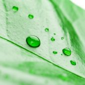 Fresh green plant leaf with water drops close up — Stock Photo