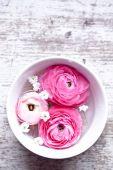 Pink ranunculus close up — Stock Photo