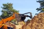 Желтый землекоп — Стоковое фото