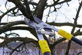 Tree pruning — Stock Photo