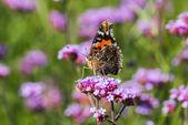 Květiny a motýli — Stock fotografie