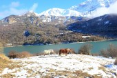 Horse in Pyrenees mountains, winter, spring — Stock Photo