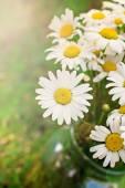 Bouquet of daisies on sunshine — Stock Photo