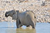 Elephant in the water, Etosha National park, Namibia — Foto Stock