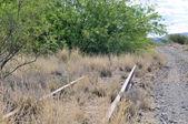 Overgrown railway track — Fotografia Stock