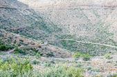 Klipspringer pass in the Karoo National Par — Stock Photo