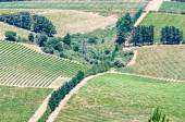 View of vineyards near Somerset West, South Afric — Stock Photo