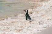 African Penguin — Stock Photo